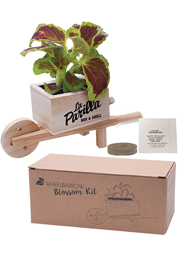 Forget Me Not Wooden Cube Blossom Kits | IL5652