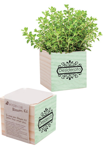 Parsley Natural Pine Wooden Cube Blossom Kits | IL5650